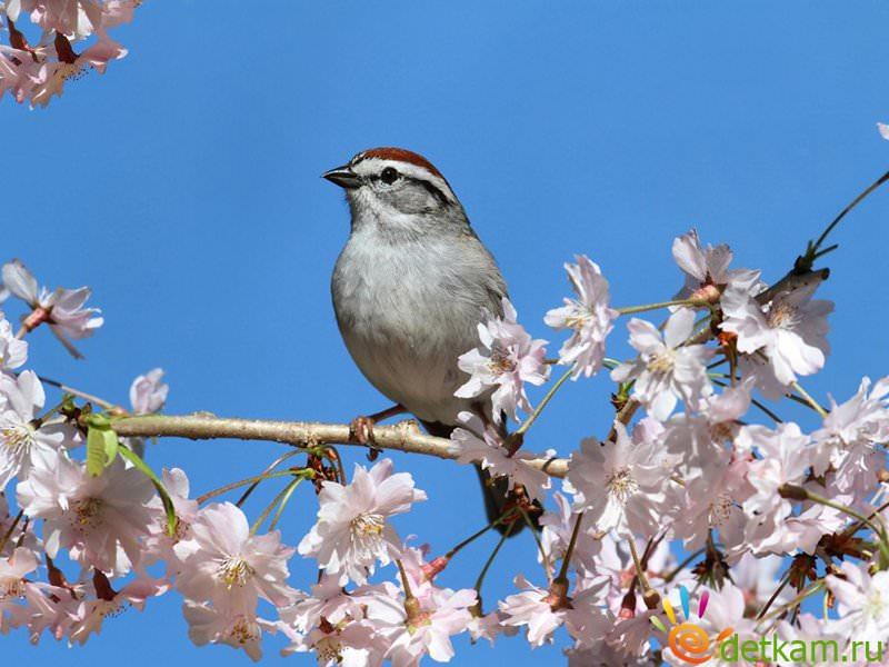Картинки о весне и птицах для детей